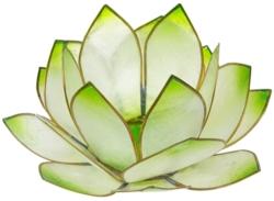 Lotus Levée du Soleil - Vert Lime